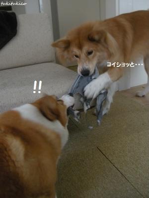 ひっぱりっこ6