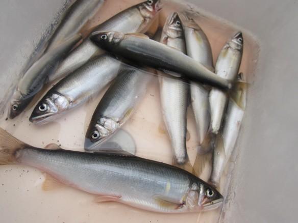 27.6.29鮎の餌釣り 013_ks