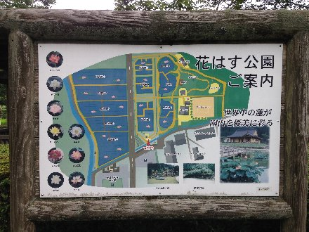 hanahasu14-044.jpg