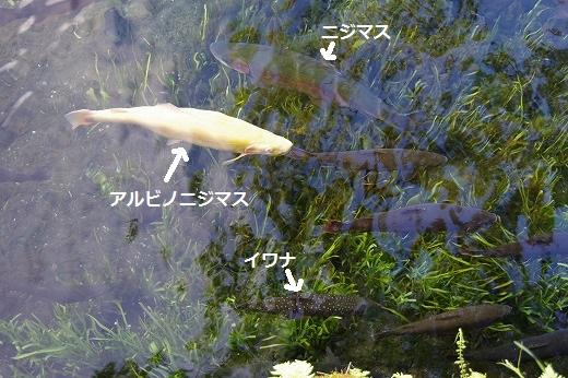 2015-07-19-IMGP1274.jpg