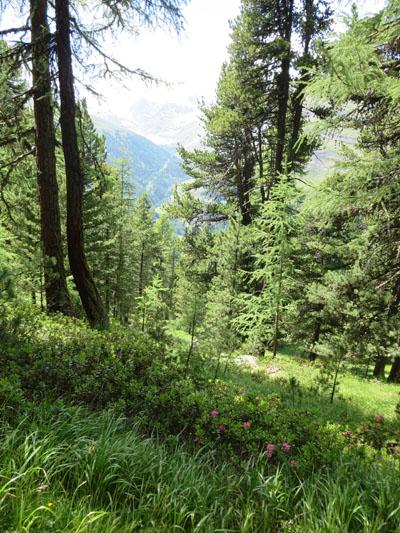 Zermatt_235