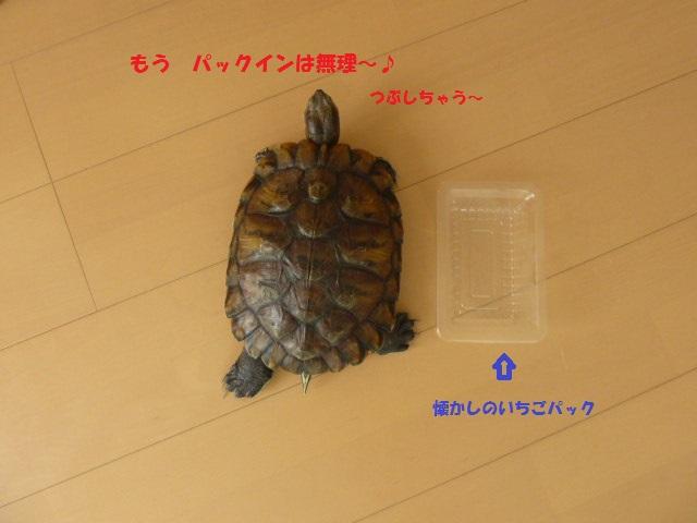 P1050672.jpg