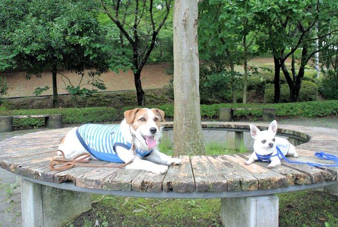 2015長岡公園0612