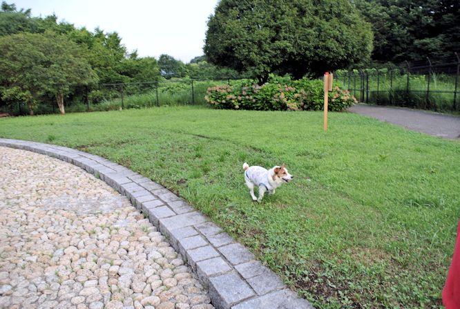 2015長岡公園0634