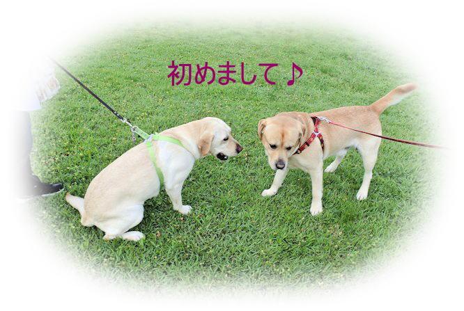 2015長岡公園0643