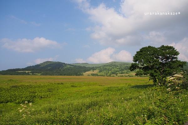 八島ヶ原湿原の風景