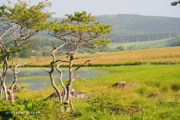 八島ヶ原湿原 鎌ヶ池