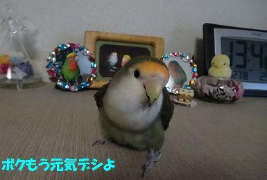 モンちゃんとの再会2