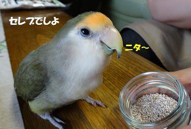 モンちゃんとの再会5