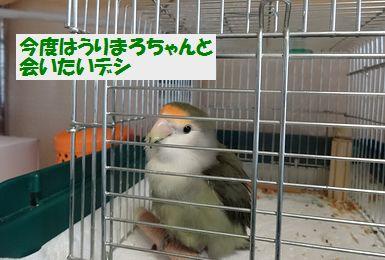 モンちゃんとの再会9