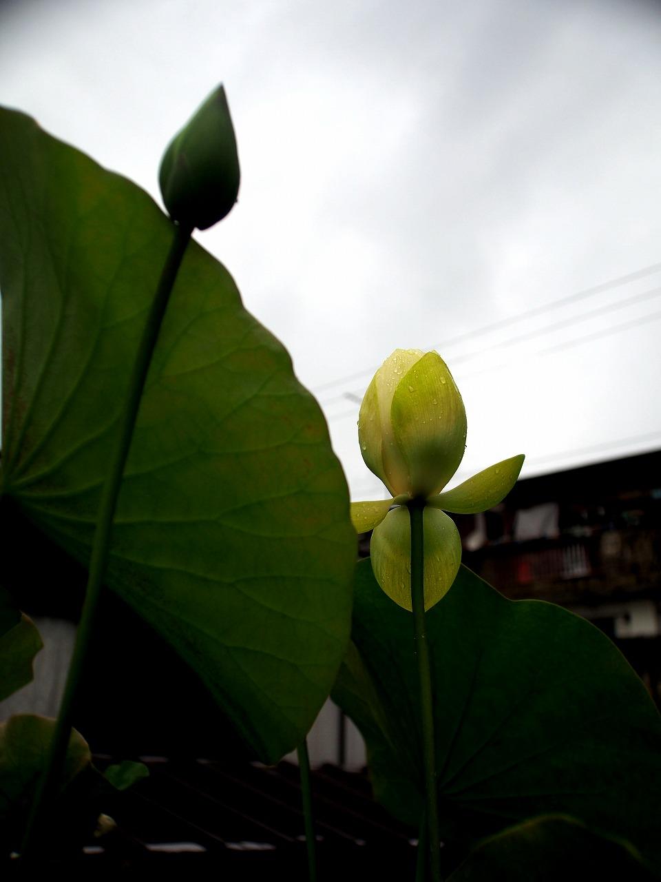 20150626-07_Kougyokuhai-P01.jpg