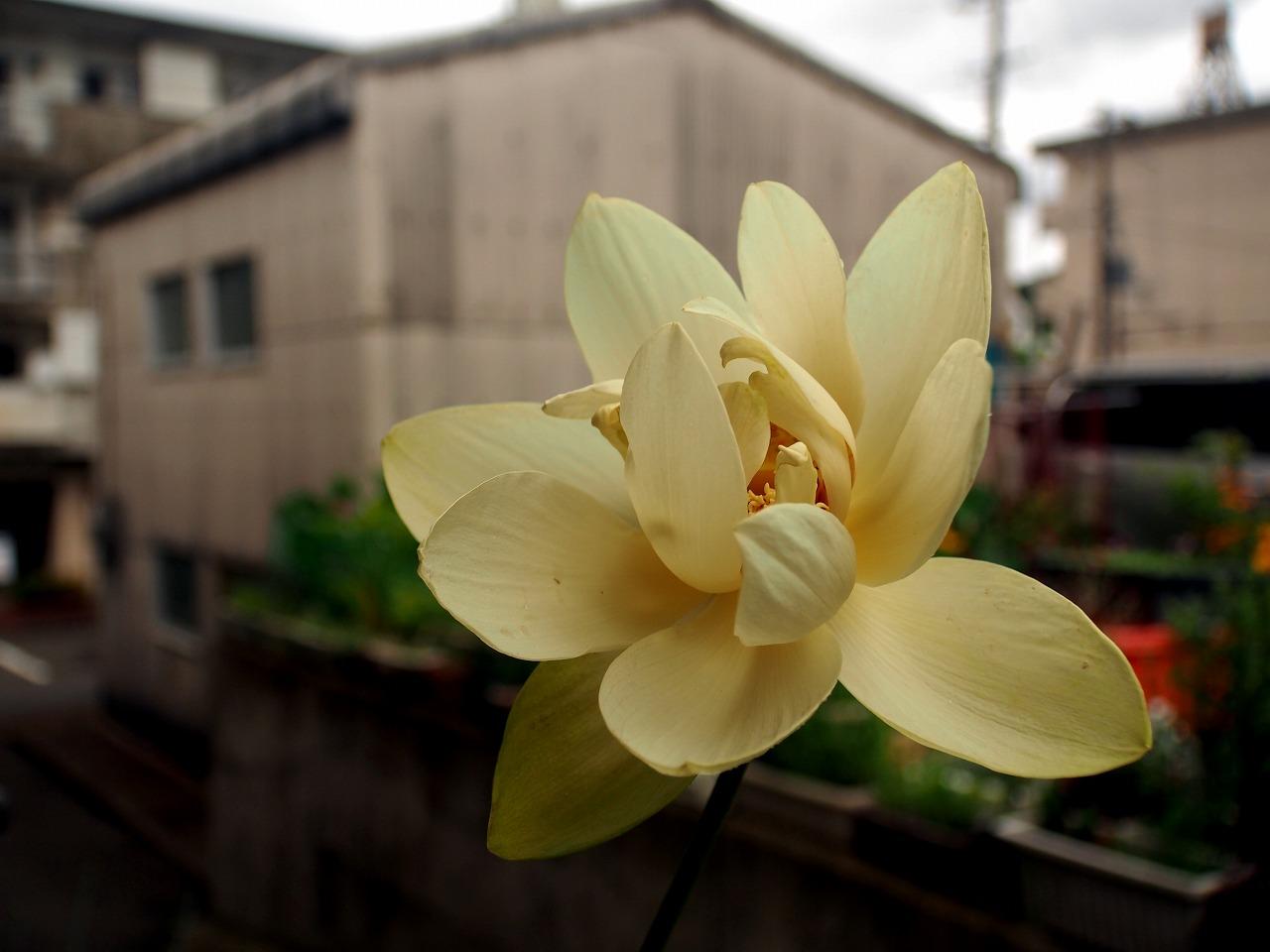 20150627-01_Kougyokuren-P01.jpg