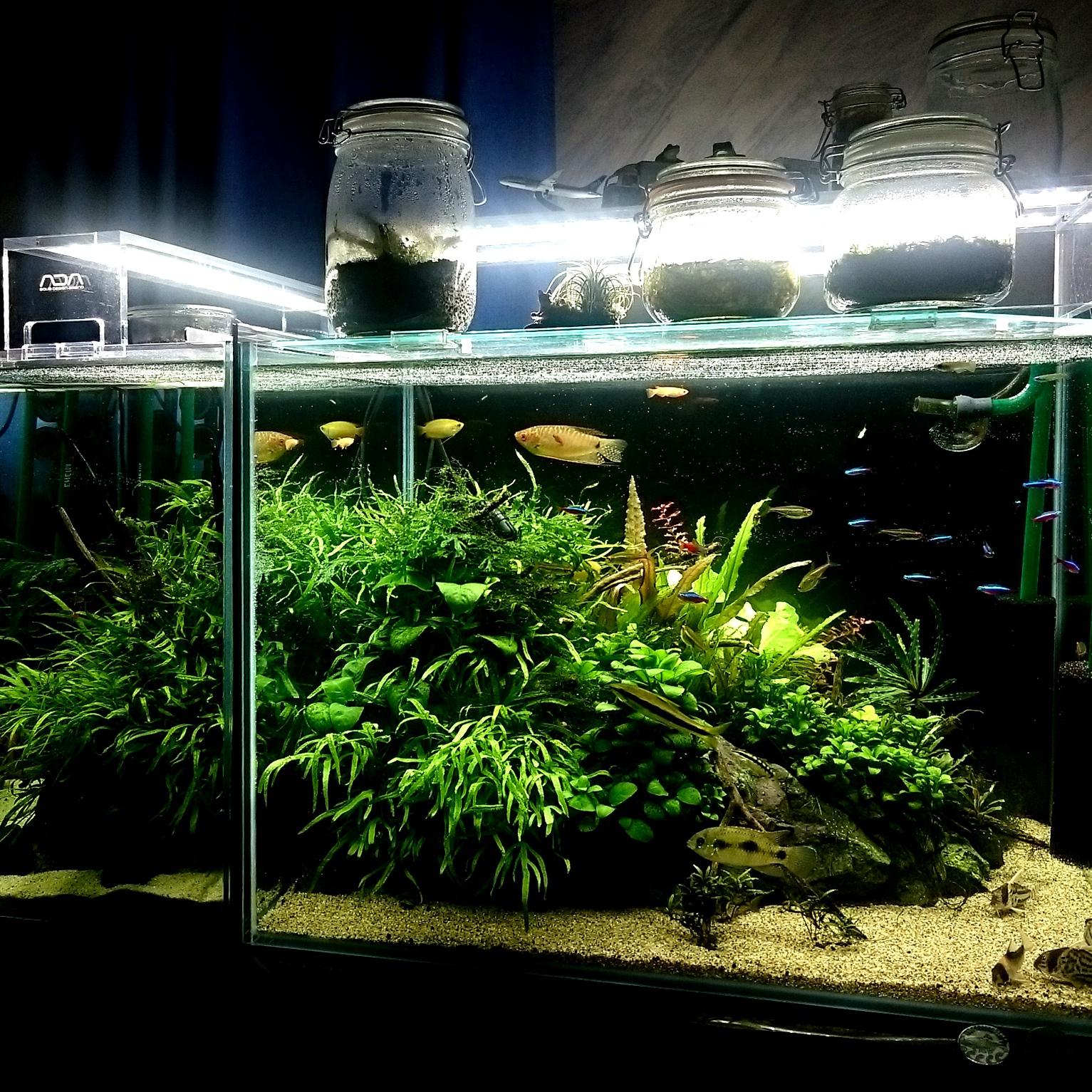 20150714-01_Aquarium-X1.jpg