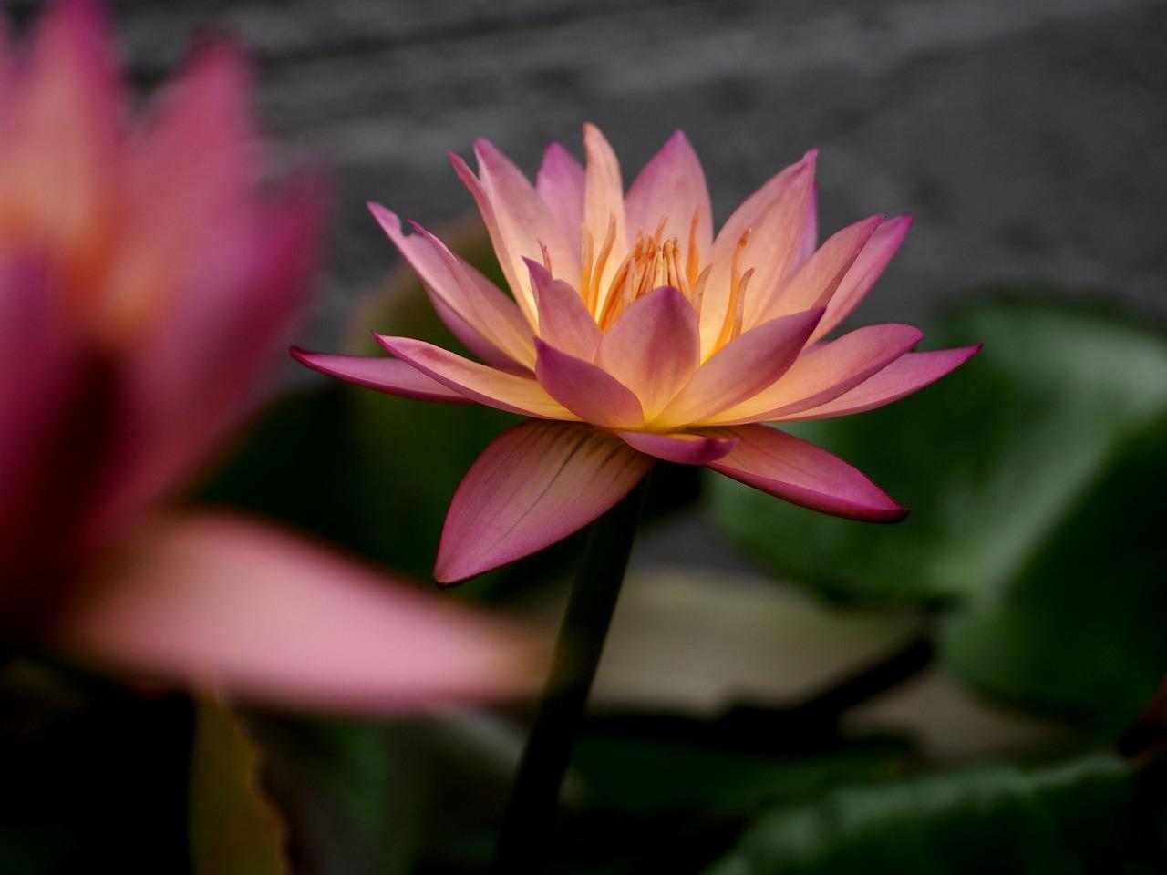 20150718-06_TropicSunset-P02.jpg
