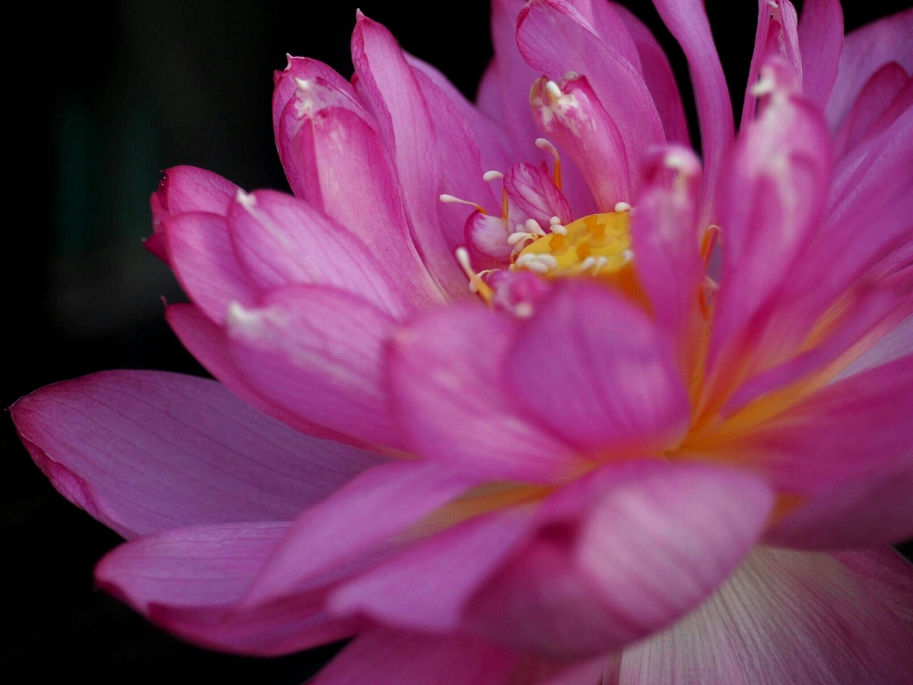20150806-02_Yaechawanbasu-P01.jpg