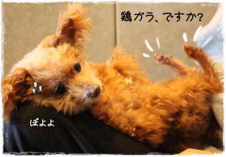 kumako7_s.jpg