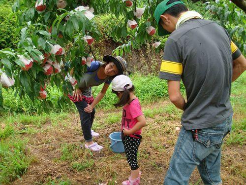 山梨県笛吹市御坂町観光農園桃狩りおすすめシーズンはいつ?空いている時期は?