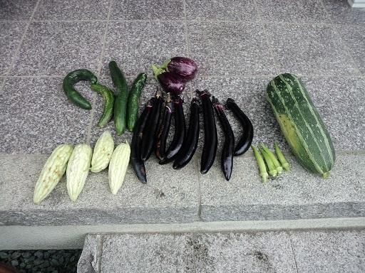 20150720_今日の収穫