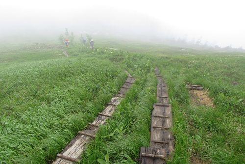 小屋下の湿原