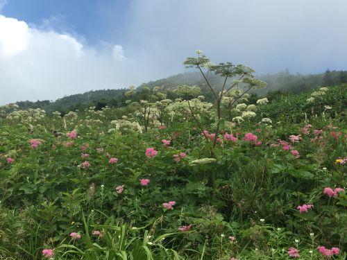南竜道お花畑