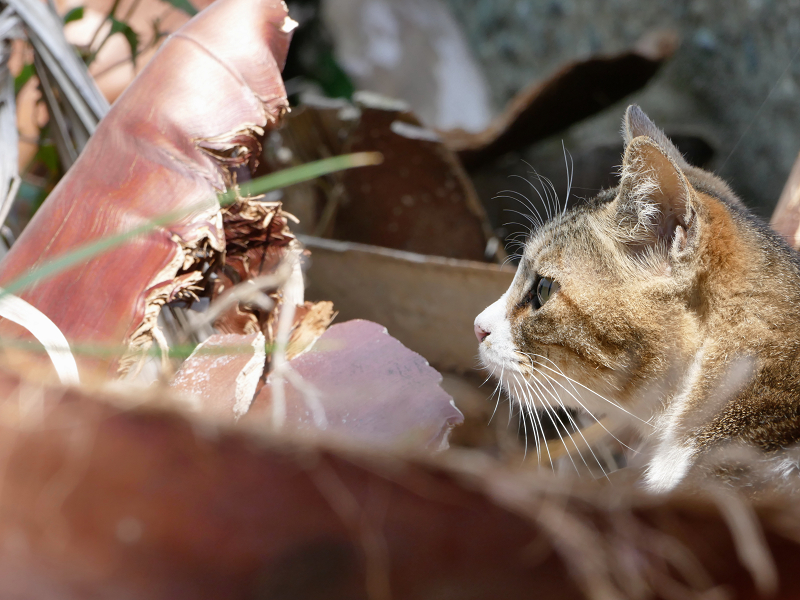 岩場の猫の横顔