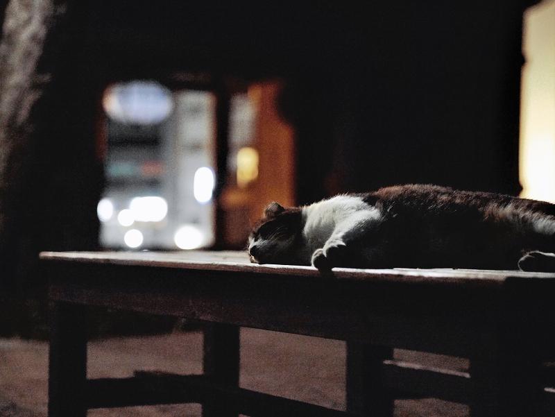 夏の夜のバテ猫1