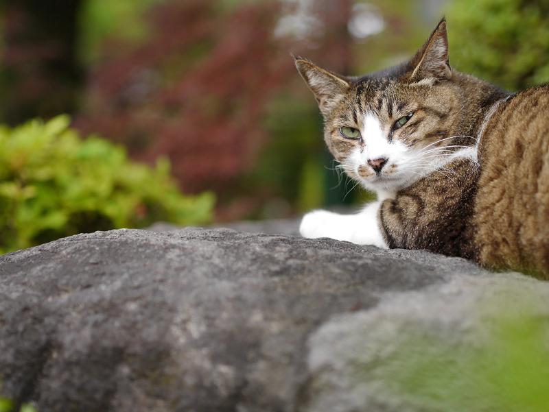 起きて振り返る猫