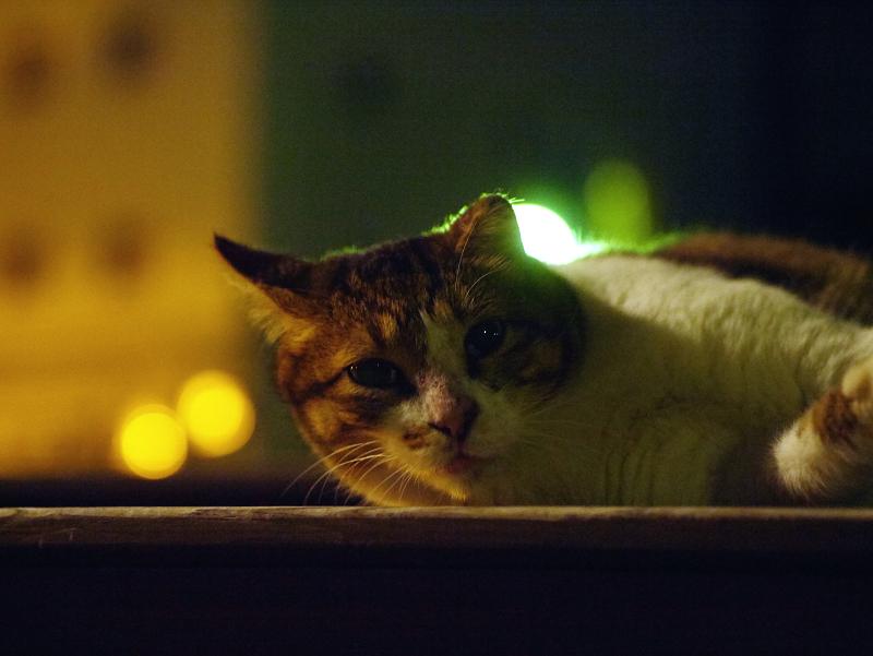 夏の夜のバテ猫3