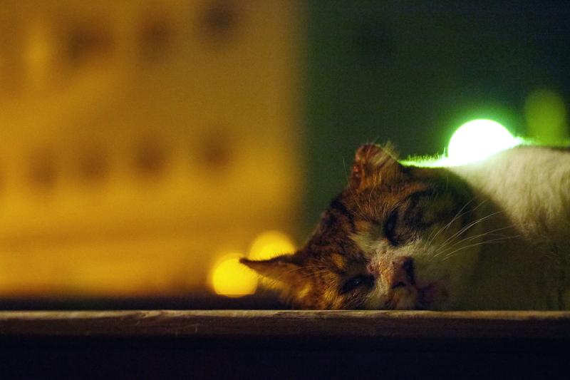 夏の夜のバテ猫4