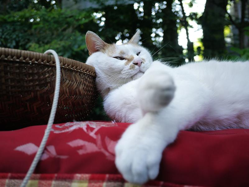 籠に頭を乗せてる緋毛氈猫