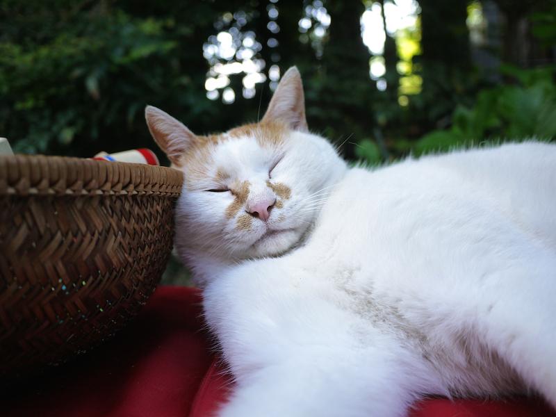 籠が枕代わりの緋毛氈猫