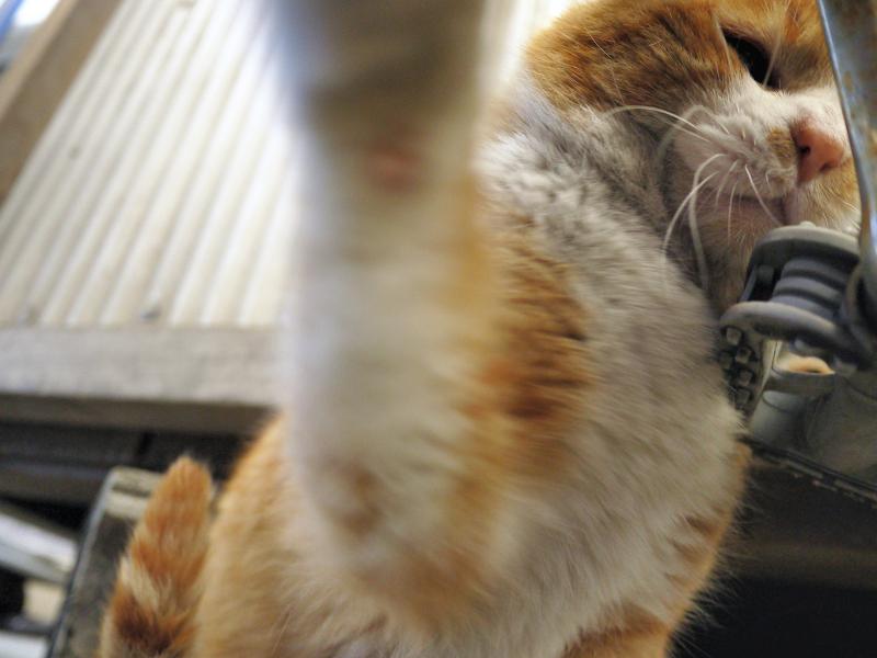 猫パンチを繰り出した茶白猫