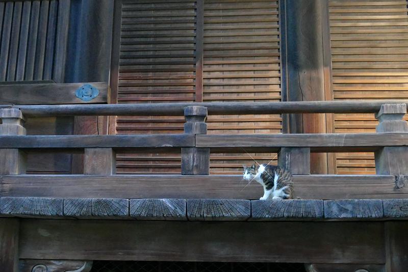 クロスフィルターで輝く猫