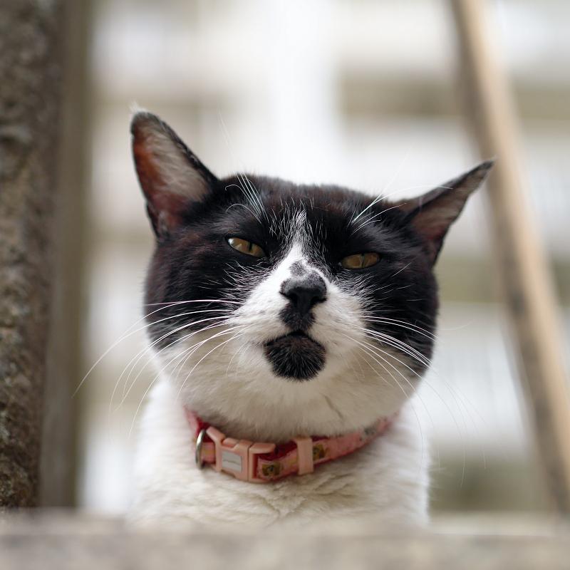 白黒猫の団子柄1