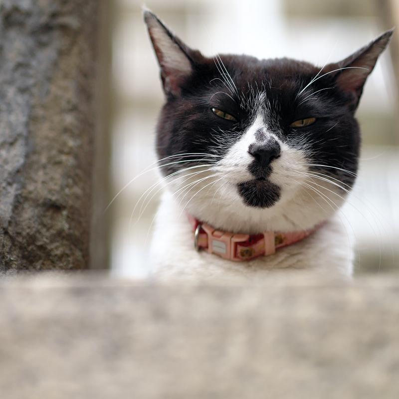 白黒猫の団子柄2