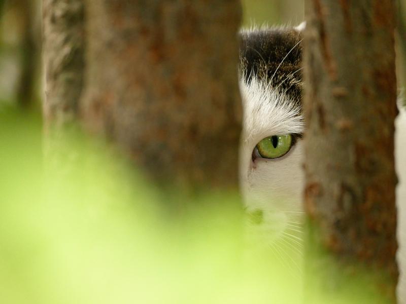 木の間から睨む猫2
