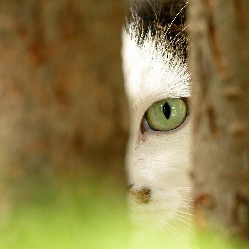 木の間から睨む猫3