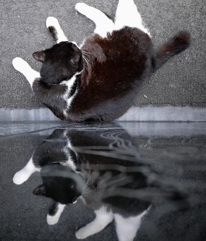 友だち猫の映り込み