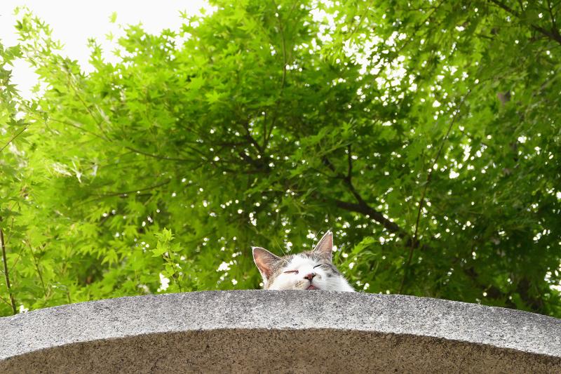 石柱の笠の猫1