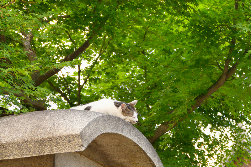 石柱の笠の猫2