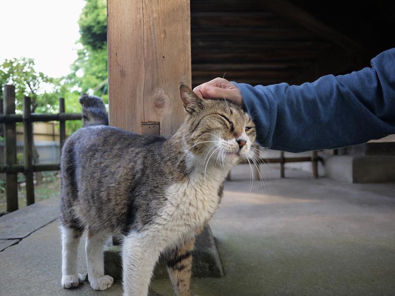 お堂の裏で触られる猫1