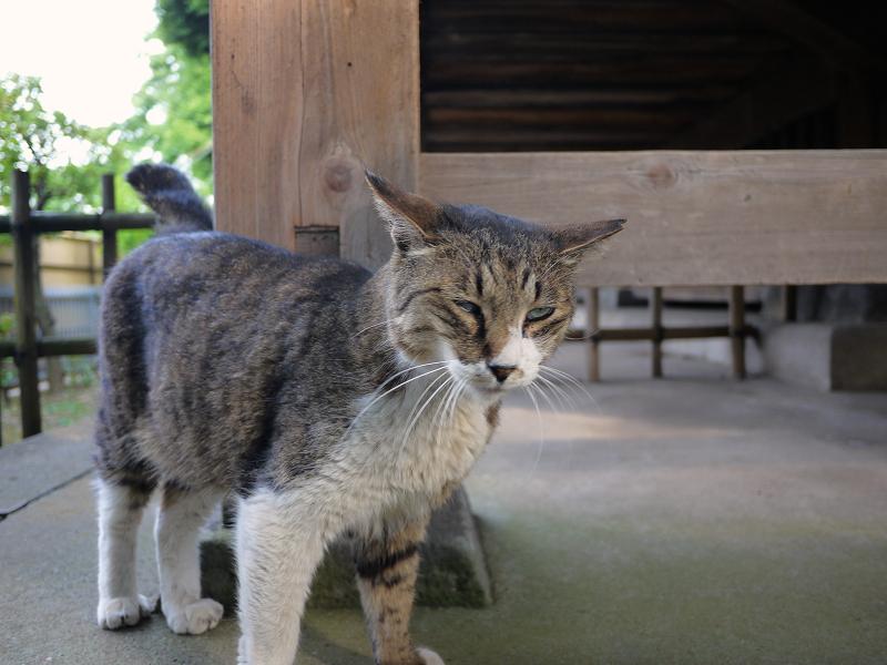 お堂の裏で触られる猫2