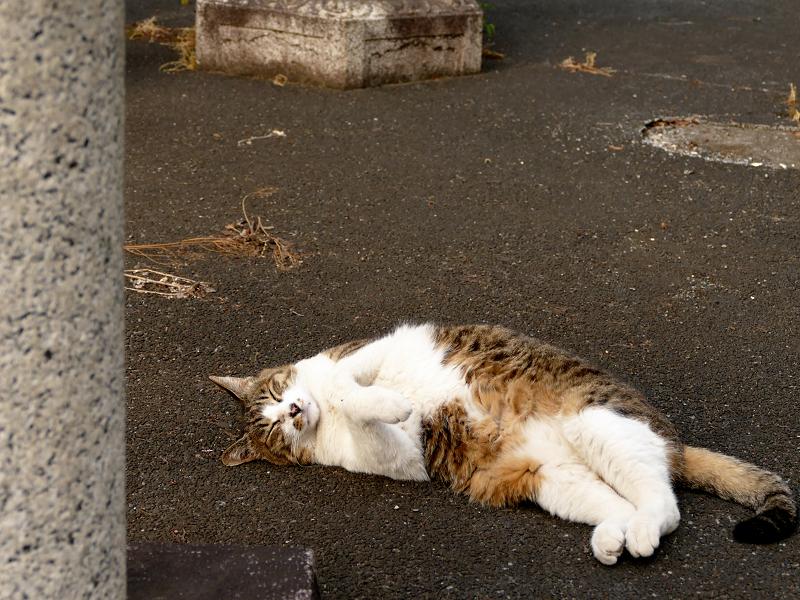 玉垣の中で寝てる猫1