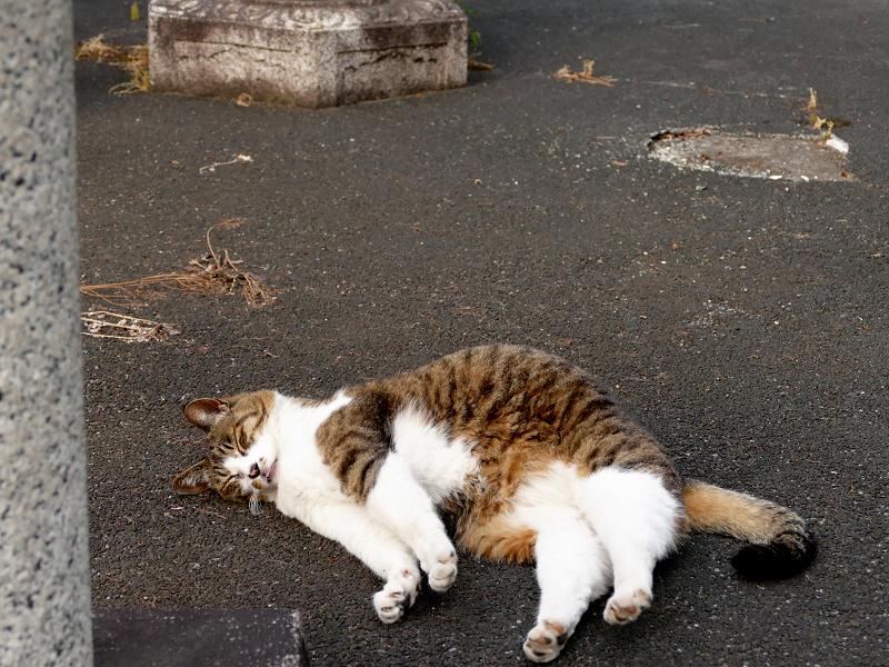 玉垣の中で寝てる猫2