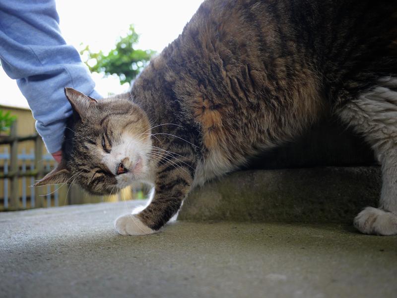お堂の裏手で触られた猫1