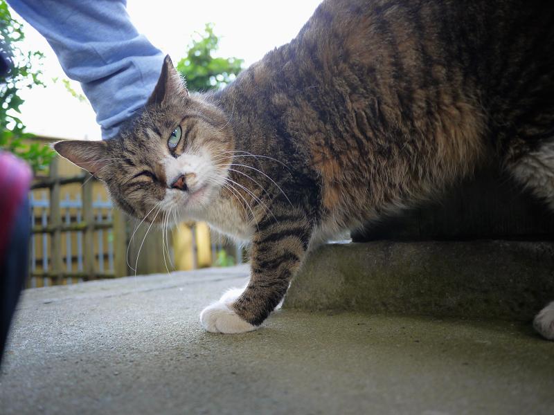 お堂の裏手で触られた猫2