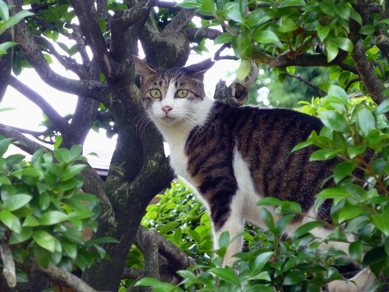 低い木に乗ってる猫