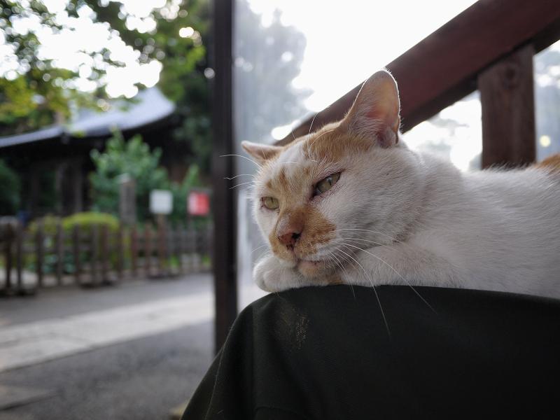 私の膝に乗ってる猫