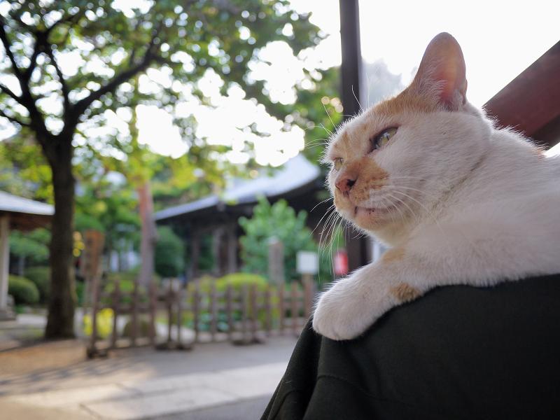 私の膝の上の猫