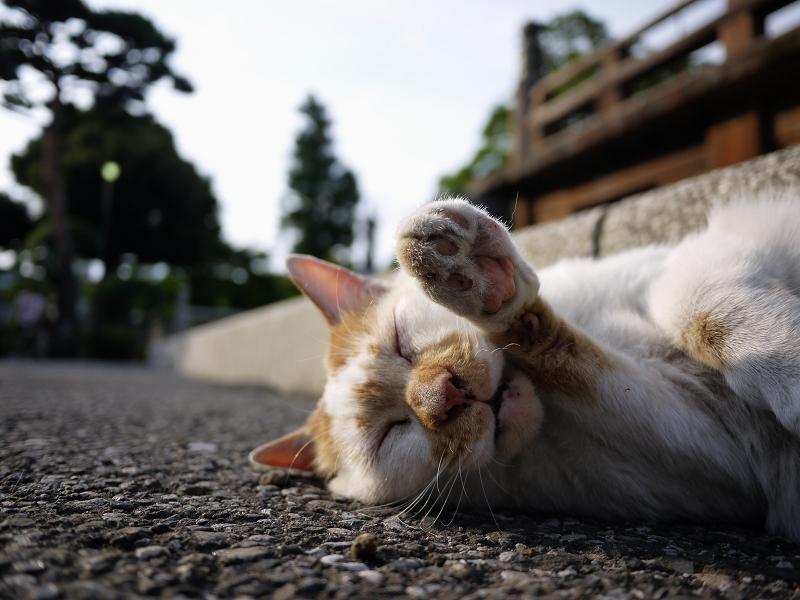 顔の前で手をクロスする猫